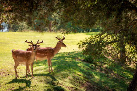 Wonderful deers in forest at sunny day, Poland, Europe Stok Fotoğraf
