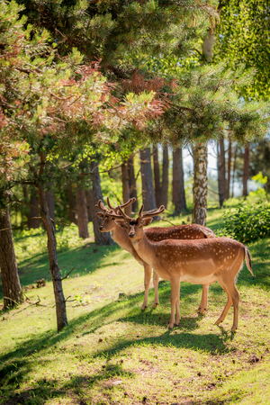 Stunning deers in forest at sunny day, Europe