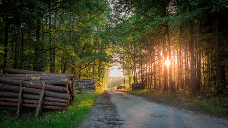 Beautiful sunrise in the forest at summer in Poland Stok Fotoğraf
