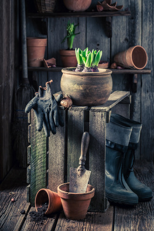 Closeup of spring flowers in old wooden shed Stock Photo