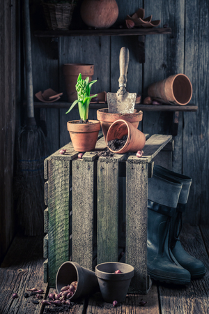 Spring flowers and red pots in wooden shed