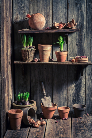 Wooden shed with old clay pots and gardening tools