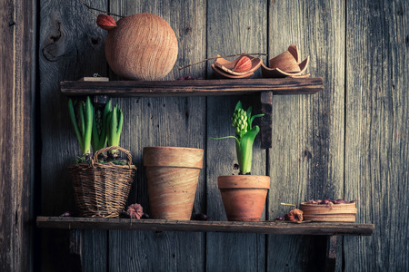 Old clay pots and spring plants on wooden shelf Stockfoto