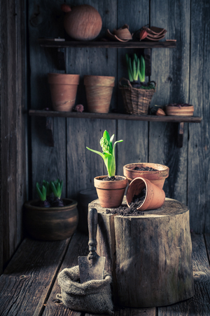 Young green plants in old red clay pots