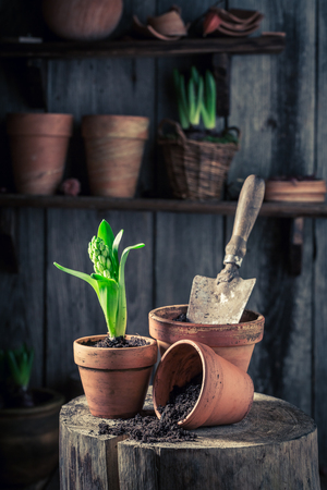 Small green plants in old red clay pots