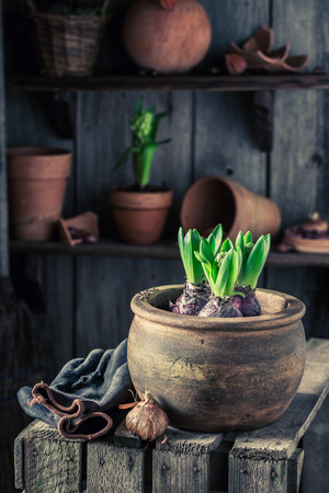 Spring and young flowers with red clay pots Stock Photo
