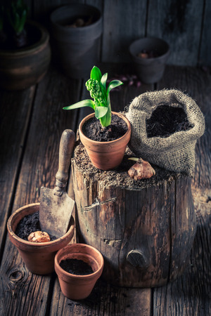 Closeup of planting spring flowers and old red clay flowerpots Stockfoto