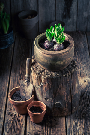 Closeup of green plants and old clay pots Stockfoto