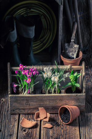 Spring and young flowers on fertile dark soil Stock Photo
