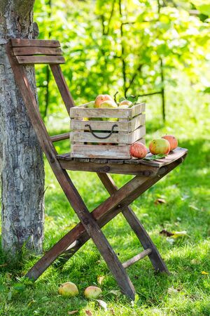 Fresh red apples in wooden box in sunny day