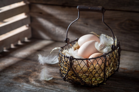 Ecological and fresh eggs from the henhouse Banco de Imagens - 98703220
