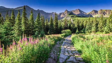 Beautiful trail in Tatras leading to a mountain shelter, Poland