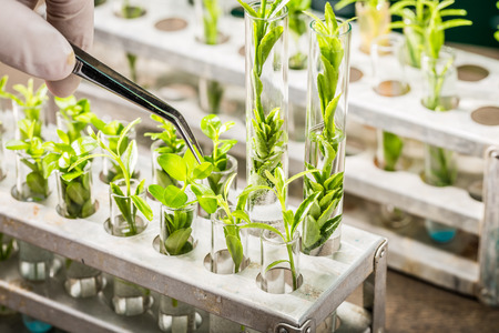 School lab exploring new methods of plant breeding