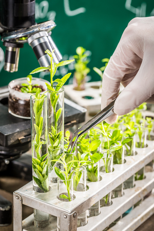 School laboratory testing of small green plants Stock Photo