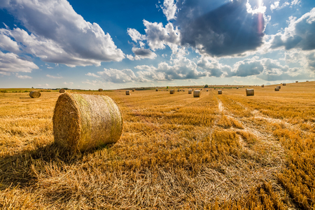 Golden sheaf of hay on the field at summer Stock Photo