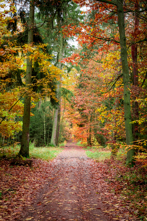Path full of leaves in old forest at autumn, Poland Standard-Bild - 102388901