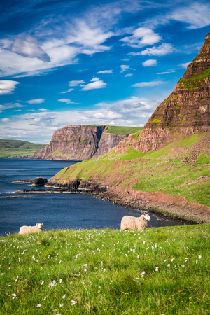View to sheeps on the coast, Scotland, United Kingdom Stock Photo