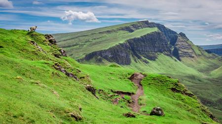 Green hills and sheeps in Quiraing, Scotland, United Kingdom