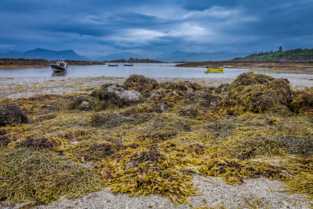Algae coastline and black stones at low tide, Scotland Stock Photo