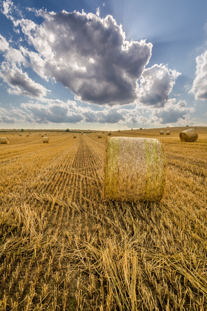 Golden sheaf of hay andf blue sky at summer Foto de archivo - 102389215