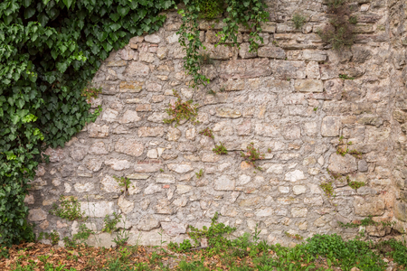 Old stone wall with ivy as rustic background Banque d'images - 102389358