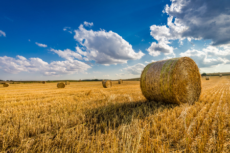 Yellow sheaf of hay on the field and blue sky Foto de archivo