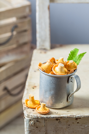Edible mushrooms in an old aluminum cup on white table