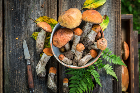 Top view of fresh wild mushrooms on wooden table 写真素材