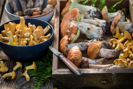 Closeup of raw wild mushrooms full of flavour and aromatic 写真素材