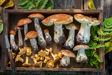 Top view of edible wild mushrooms in wooden box