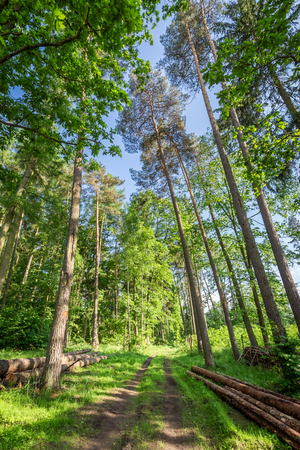 Amazing green forest in the summer, Poland