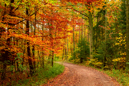 Yellow and green autumn in the forest, Europe 스톡 콘텐츠 - 105626247