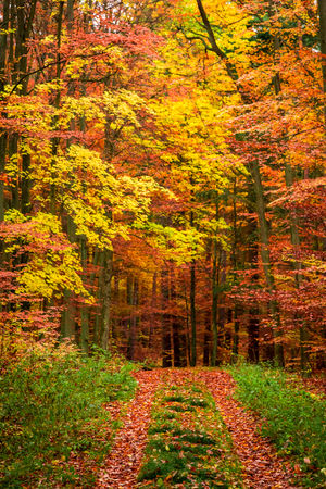 Beautiful forest full fo leaves in the fall, Poland Stock fotó