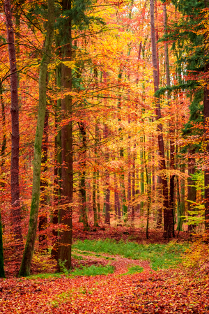 Wonderful leafy path in the forest in fall, Poland Banco de Imagens