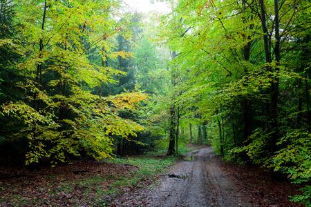 Atemberaubender grüner Weg im Wald, Polen