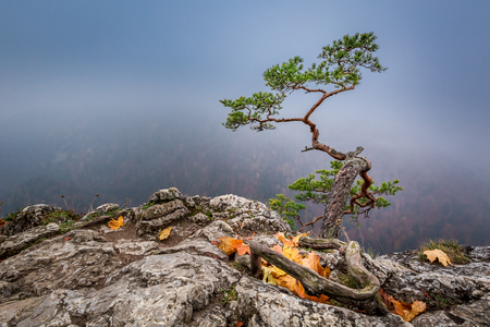 Misty Sokolica peak in Pieniny mountains in autumn, Poland