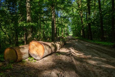 Large amount of tree felling in spring Stock fotó