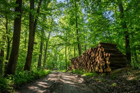 Almacenado en el bosque tala de árboles después de la tormenta Foto de archivo