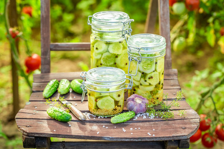 Natural pickled cucumbers on wooden chair in greenhouse