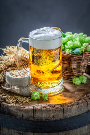 Fresh pint of beer with foam, hops and wheat
