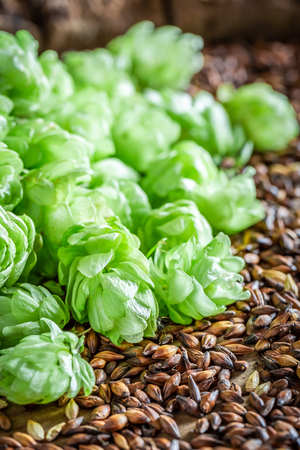Green and brown hop and malt as ingredients for beer