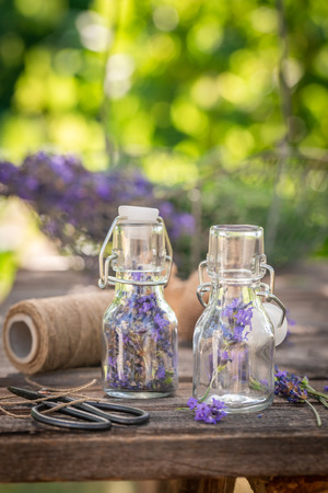 Freshly harvested lavender in small bottles in garden
