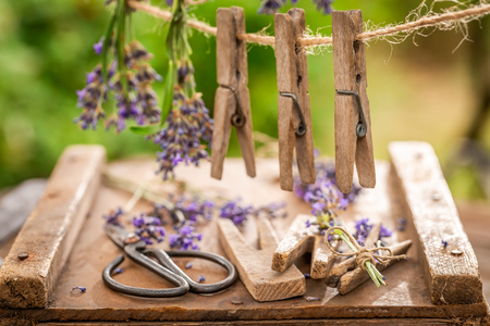 Homegrown and fresh lavender hanging on a line with clasps Imagens