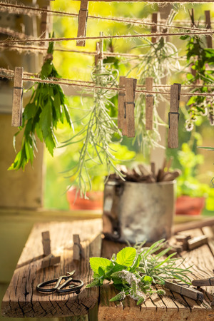 Rustic wooden dryer with fresh herbs in countryside Imagens