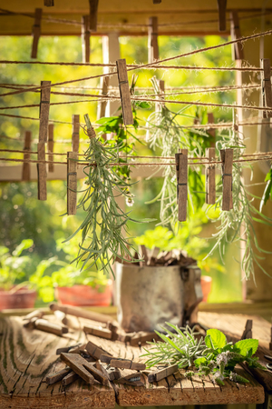 Aromatic herbal dryer with herbs dried on laundry lines Stock fotó
