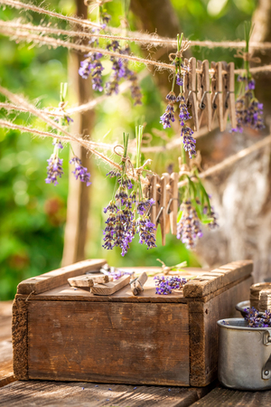 Aromatic and pleasant lavender hanging on a line with clasps Imagens
