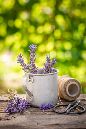 Homegrown and fresh lavender in a summer garden