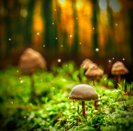 Small mushrooms on moss and fireflies in forest at dusk Stock Photo