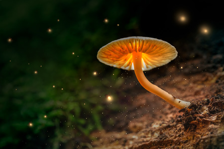 Glowing mushrooms and fireflies in magical forest at dusk