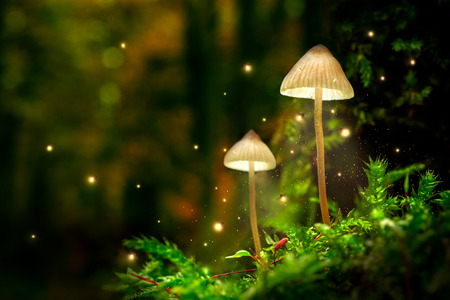 Glowing mushroom lamps with fireflies in magical forest Banco de Imagens - 112140289